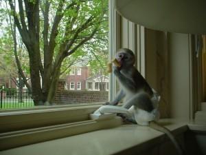 Baby Monkeys for Adoption(732) 654-6954