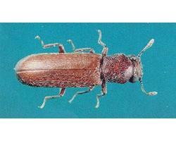Alpha Ecological Pest