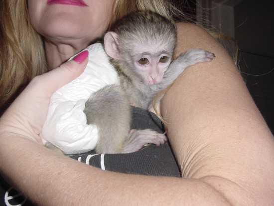 Healthy B.A.B.Y.C.A P.U.C.H.I.N.G monkeys!!!(240) 233-4147