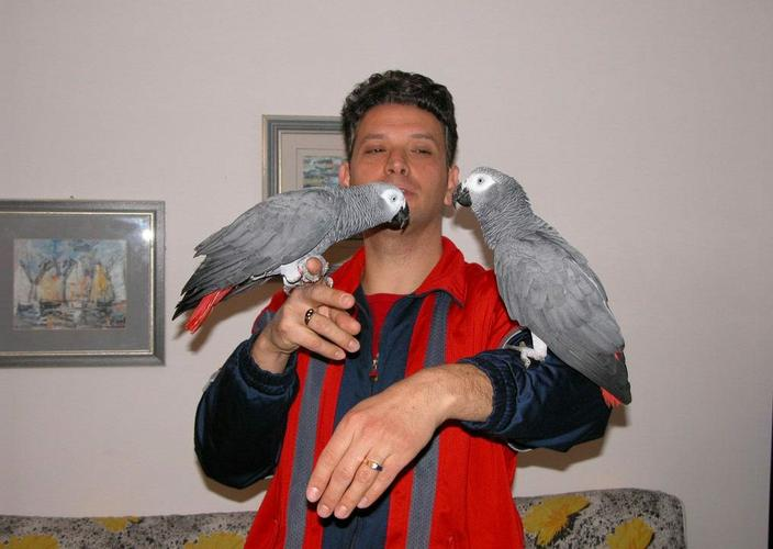 Pair of African Grey Parrot for Sale