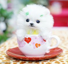 Beautiful.Cute P.o.m.e.r.a.n.i.a.n puppies!!sms (252) 678-5431