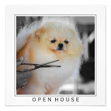 Male and female Pomeranian for adoption