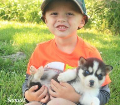 CUTE S.i.b.e.r.i.a.n H.u.s.k.y. Puppies: contact us at.410-934-0909.