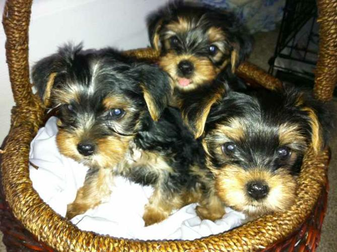 Both males and females puppies Only letting go due to major life changes