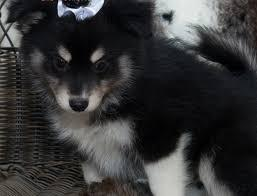 P.re.tty Male P.om.sky Available