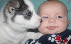 Quality siberians huskys Puppies:!!!contact us at(563) 794-4791