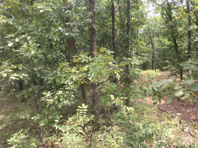 Cedar Tree and Brush Mulching