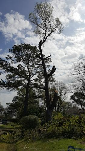 Removals and plantings of trees in your garden