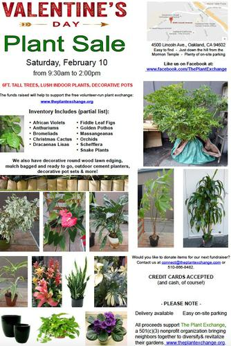 Valentine's Day Plant and Garden Sale: 50-60% Off Retail Prices