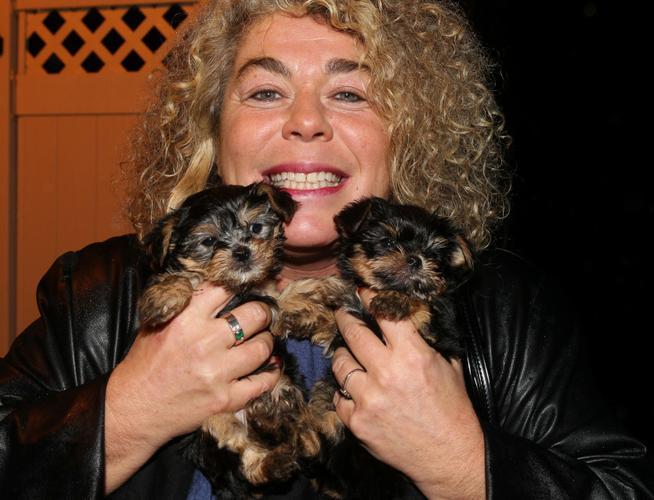 2 YY.O.R.K.I.E Puppies