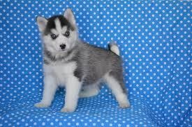 FREE Beautiful P.o.m.sky Pu.pp.ies Available (912) 421-6312.
