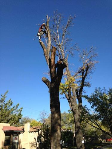 AMERICAN TREE SERVICES - Tree/Shrub Trimming, Removal, Transplanting
