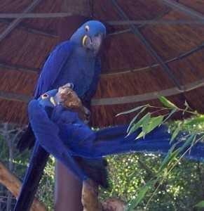 Macaw Parrots for sale.text us at 678 xx 823 xx 9395