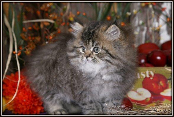 adorable sweet kittens for adoption