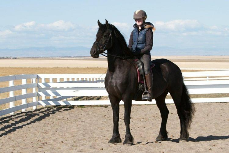Friesian   Full Papered : contact us at (302) 583-3065