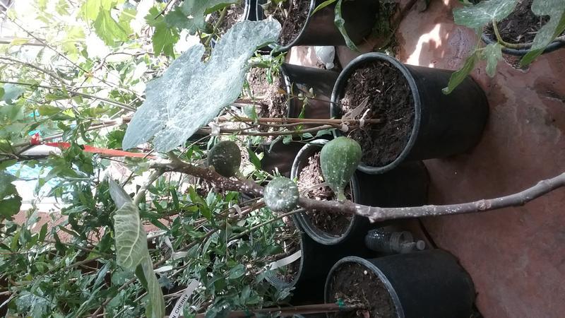 FRUIT TREES THAT GROW IN HIGH DESERT