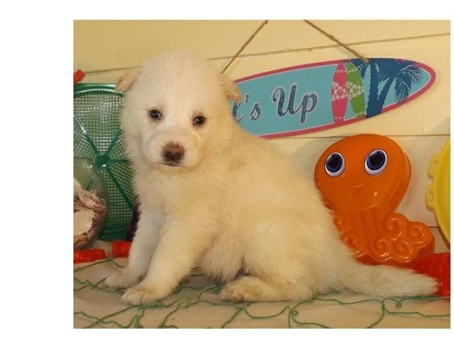 Smart Brillant Trained male and female P.om.sky Contact 320 968 1625 or marilynkay1000@gmail.com