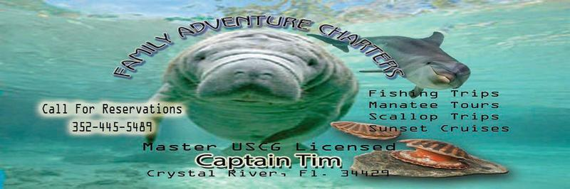 Best Manatee Tour in Crystal River Florida