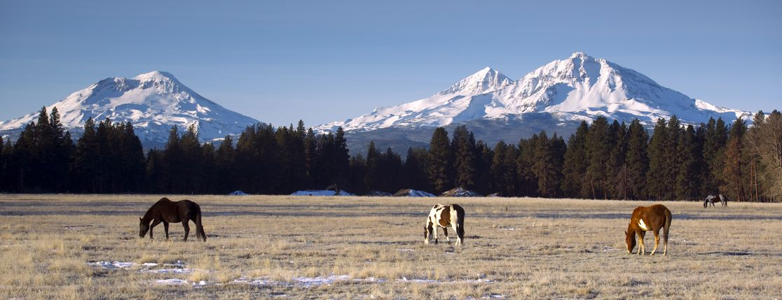 Western Ranch Management & Realty, Inc.