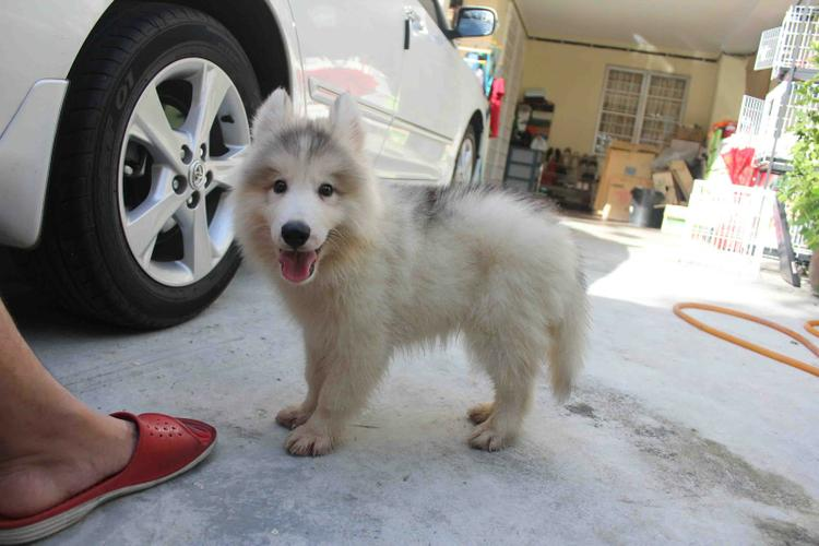 FREE Beautiful Po.m.sky Pu.pp.ies Available (612) 444-0956
