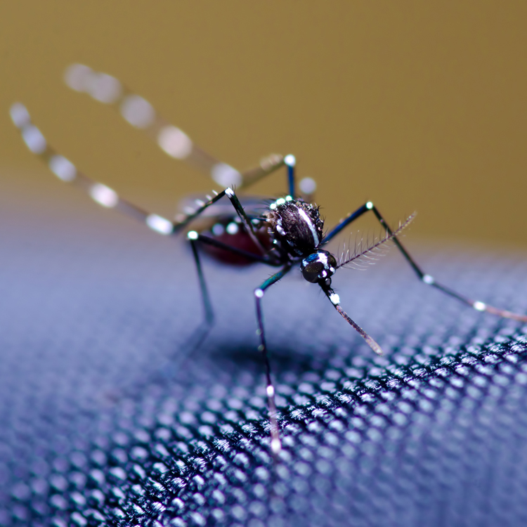 Mosquito Squad of Fairfield County & Westchester County