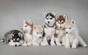 Beautiful Male and Female Puppies