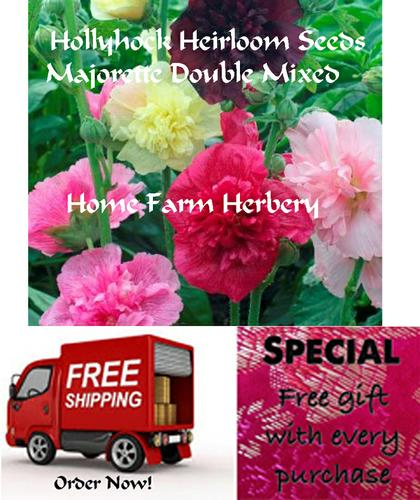 Hollyhock Heirloom Seeds Majorette Double Mixed, Order now, FREE shipping & a free gift.