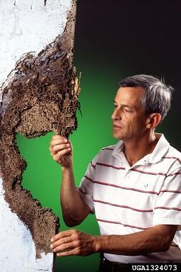 Alamo Insect Control