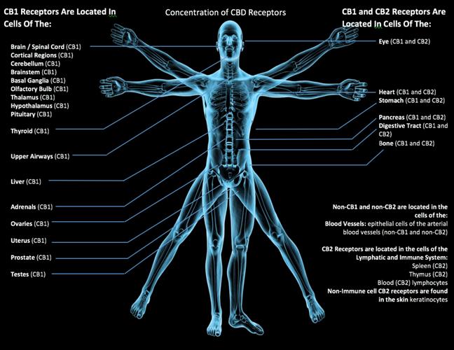 High Quality CBD Pain Balm, Oils, Skincare, and Pet Care
