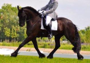 Horse for Sale (fancy) (410) 989-9845