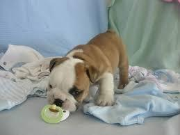 FREE English_.. Bulldogs*_ Puppies For Rehome Contact#_678 *616*1238- ..;'; .Males and females ava