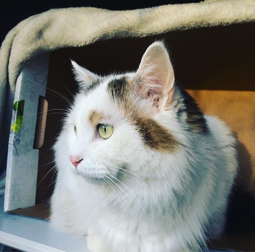 Friendly, beautiful cat for Sale!
