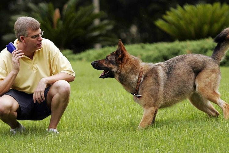 Best Dog Training Collar To help you guide your dog toward proper behavior