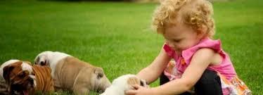 FREE/FREE Affectionate FREE/FREE M/F English B.u.l.l.d.o.g Puppies!!! contact us at (301) 463 7620