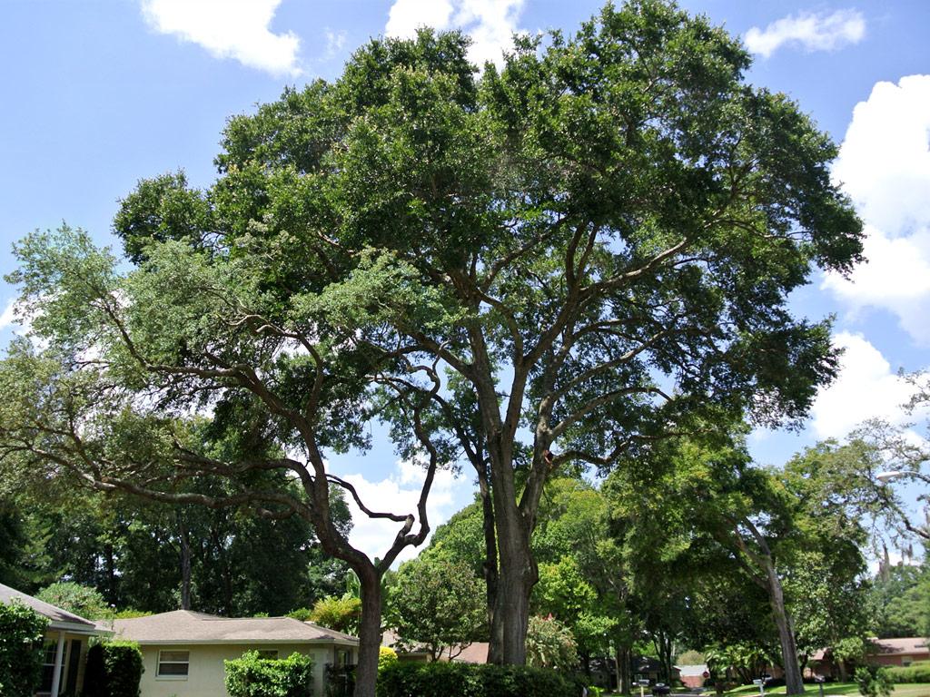 Beaver Tree Service, Inc.