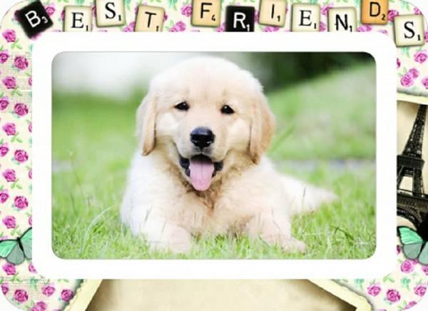 Cute Golden Retriever puppies:)