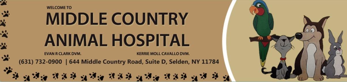 Cavallo Kerrie Moll, D.V.M. - Middle Country Animal Hospital
