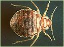 Ecological Pest Control