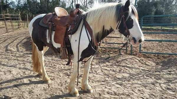 Stunning Gypsy Vanner Colt