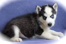 !!!!sweet puppies!!!!