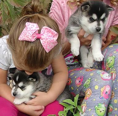 X.MASS We have beautiful and cute p.o.m.s.k.y Puppie.s {404}698-1655