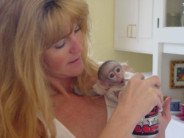 charming capuchin monkey for adoption...