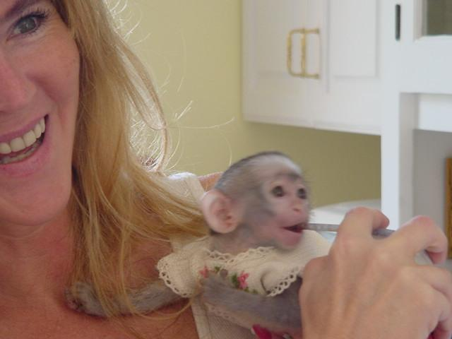 cute looking baby capuchin monkeys for adoption
