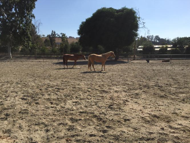 For Rent! Stunning updated Single Story Equestrian Home 1/2 acre