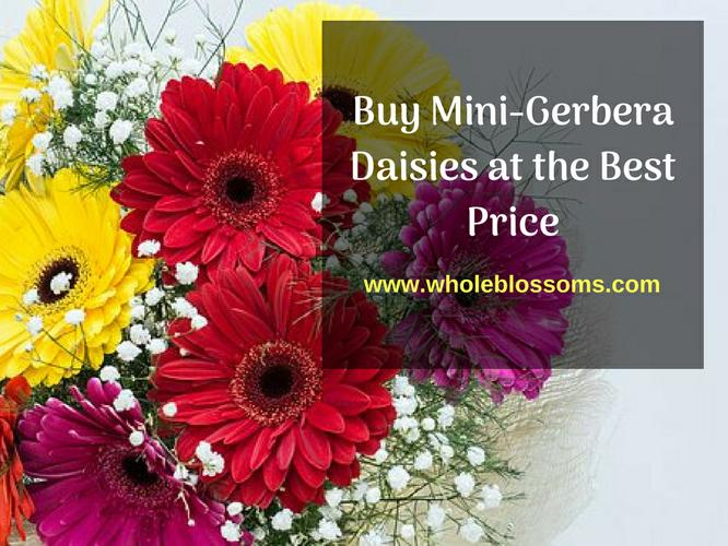 Order Mini Gerbera Daisies for Your Wedding