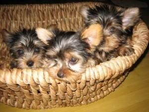 F.r.e.e, Ready Now 3 months Old # (404) 596-6424