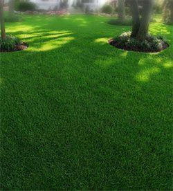 Emerald Cut Lawns & Landscape