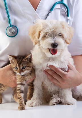 Claus Paws Animal Hospital