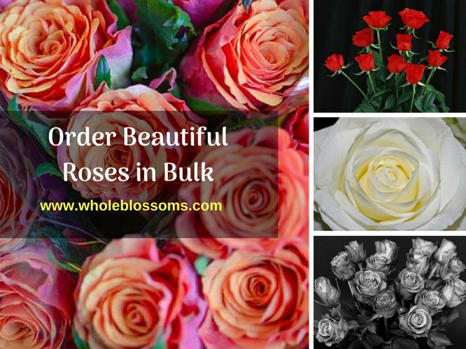 Order Wholesale Roses of Different Colors