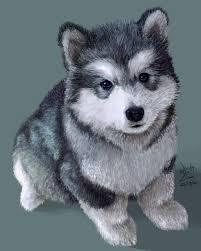 ???Free Quality siberians huskys Puppies:???contact us at (505) 585-7795
